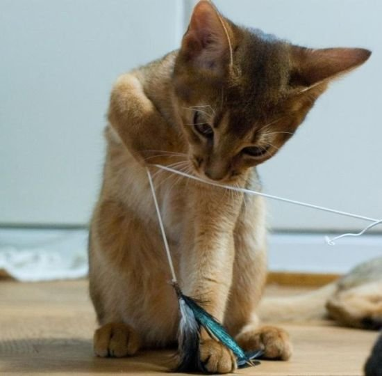 Enjoy your day - cat with string