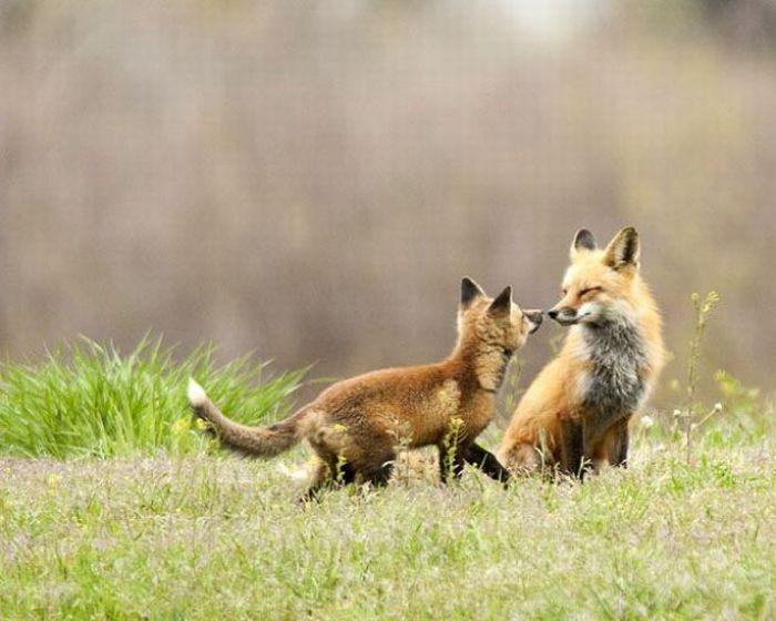 Enjoy your day - foxes (2)