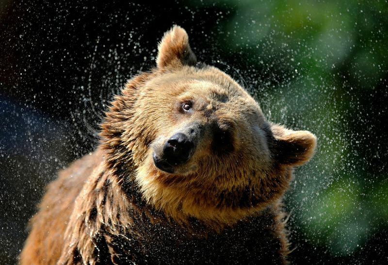 SPAIN-WEATHER-HEAT-ZOO-BEAR
