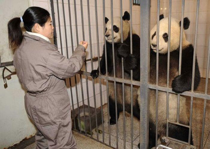 Enjoy your day - pandas jail
