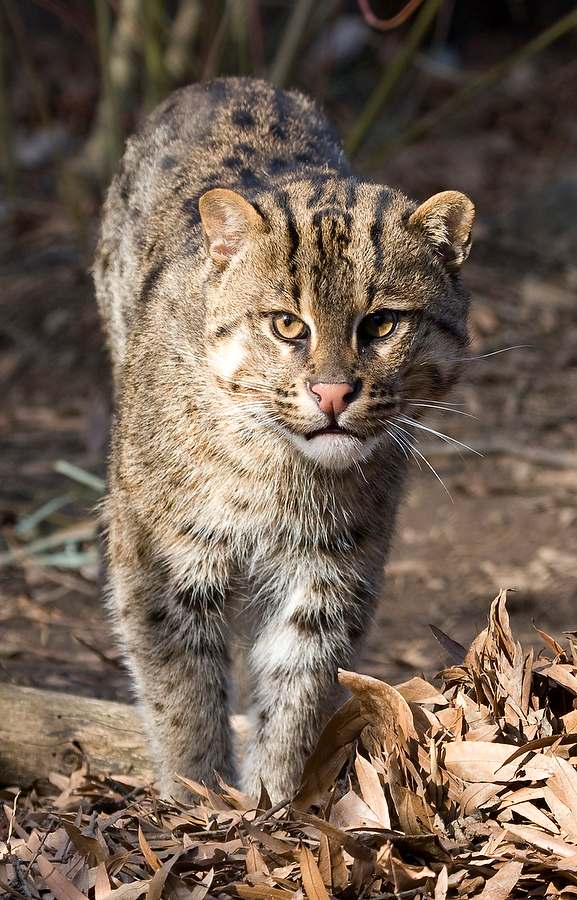 USA FISHINGCAT